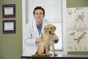 10 Fatos mais importantes sobre veterinários