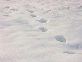Polaris projetou o RMK Vertical Escape para executar particularmente bem em condições de profundidade de neve.