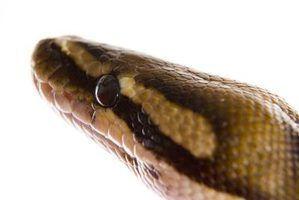 Projeto de feira de ciência grau 3ª nos habitats de cobra