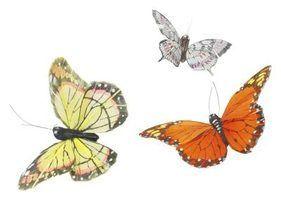 Atividades para pré-escolares sobre o ciclo de vida de uma borboleta