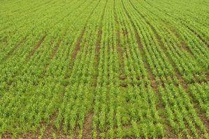 Programas de poupança de impostos agricultura