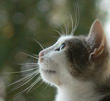 Alternativas aos antibióticos para uti gato