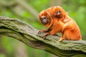 Animais encontrados na floresta verde tropical