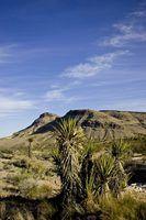 Animais no deserto de utah
