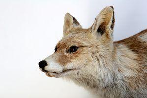 Os animais que são encontrados em ecossistemas tennessee