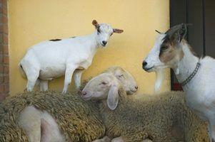 Animais para aumentar em fazendas passatempo
