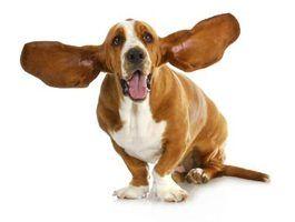 Freqüências de áudio que são dolorosas para cães