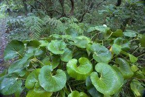 Plantas tropicais folha grande