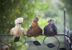 Dispositivos de escuta de aves