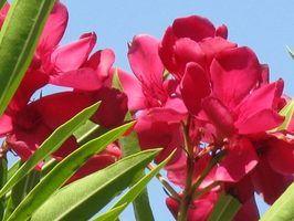 Plantas florescendo para a costa do golfo do texas