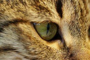 Sintomas hoarder cat