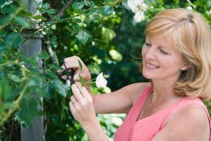 Ideias de jardinagem baratos e fáceis