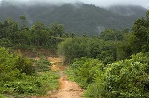 Animais comuns na floresta tropical