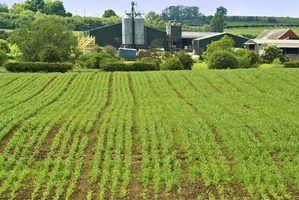 Noções básicas de seguro de colheitas