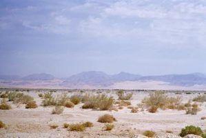Projectos de habitat do deserto para as crianças