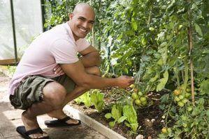 Chave dicotômica: plantas de jardim comuns