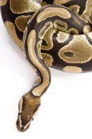 As diferenças entre escrita e writeline em python