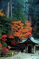 Uma lista de árvores de bordo japonês