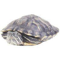 Lista de tartarugas