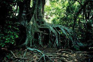 Desvantagens e vantagens de manguezais