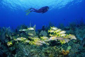 O fluxo recomendado para aquários de água salgada