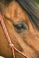 Cabrestos cavalo diy