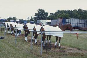 Diy cobertor de cavalo personalizado