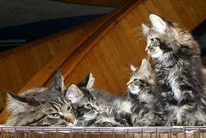 Faça você mesmo dispensador de comida de gato