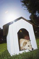 Dog ideias flutuador