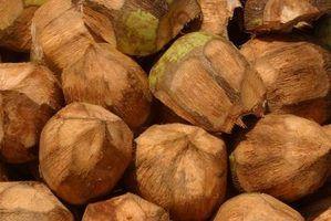 Importância económica do óleo de coco