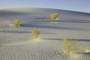 Leis de ecossistemas