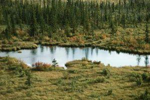 Clima em um ecossistema de lagoa
