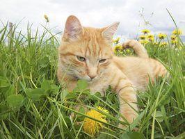 Plantas verdes comestíveis para gatos