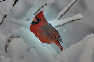 Efeitos da altura de alimentadores de pássaros