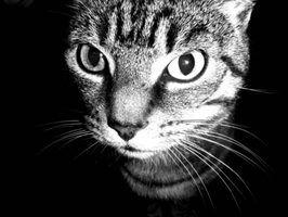 Efeitos da deficiência de potássio em gatos
