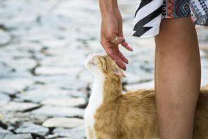 Alimentadores de gato à prova de gambá elevados