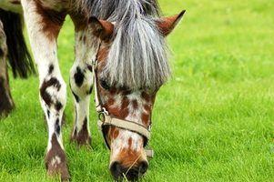 Doença de crohn equine