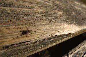 Óleos essenciais para repelir moscas de veados