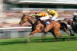 Explicação das apostas corrida de cavalos