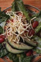 brotos de feijão mungo são uma adição comum a saladas asiáticas e pratos.