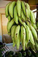 Fatos sobre bananas