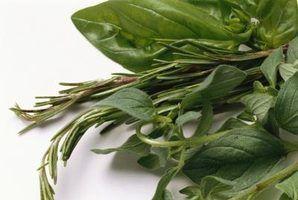 O fertilizantes as plantas de manjericão precisa?