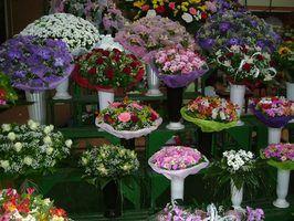 Exibição idéias loja de flores