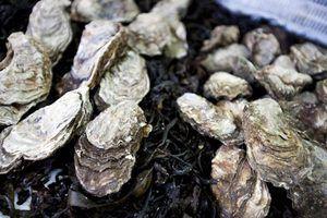 Os alimentos que vão com ostras cozinhar