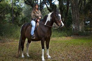 Jogos para campos de cavalo