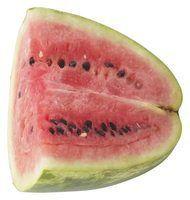 Tempo de germinação de melancia