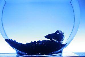 Terrários de vidro para plantas