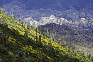 Musgo cobertura do solo que cresce no arizona