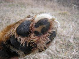Aparadores de cabelo para os pés dos cães