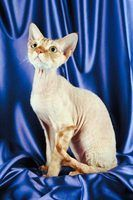 Cortes de cabelo para gatos